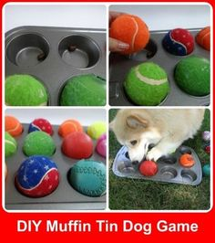 Brain Games to Challenge and Entertain your dog...DIY hide treats under a few of the balls in a muffin tin and let her seek them out.