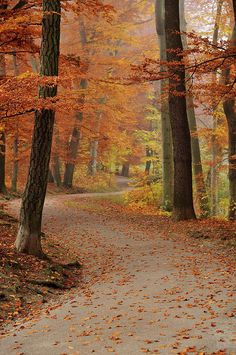 Munich Foliage by Chris Hoefer, #fall