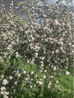 Spot the butterfly on the blossom of our very old apple trees here at Williamston Barns. Apple Tree, Family Holiday, Barns, Wilderness, Natural Beauty, Trees, England, Butterfly, Nature
