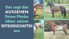Das sagt das Exterieur Deines Pferdes über seine Reiteigenschaften aus! Grundlegende Anhaltspunkte einfach verständlich erklärt.
