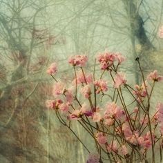 Azalea  Photograph, Floral Art Print, Shabby Chic Home Decor,  Flower Wall Decor on Etsy, 13,16 €