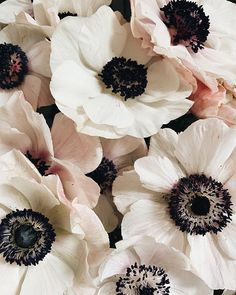 Margaritas are no doubt the drink of the season. The ice-cold beverage instantly turns a casual pool day into a celebration, and if you're looking for. Anemone Flower, My Flower, White Anemone, Flowers Nature, Beautiful Flowers, Family Flowers, Floral Flowers, Purple Flowers, Flower Power