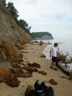 Fossil Hunting at the Calvert Cliffs of Maryland! Finding ...