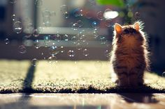 Photograph Kitten Observes Transit of Bubbles by Ben Torode on 500px