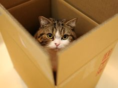 Even if there is a box in any place, Maru enters in it by all means.