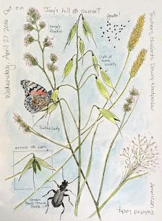 "HELEN CORRELL: ""Ground Beetle, Painted Lady, Oats, & Various Grasses"" Middlewood Journal"