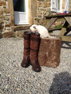 Dog's are not the only four legged friends that love Dubarry boots! #CatsLoveDubarry too!