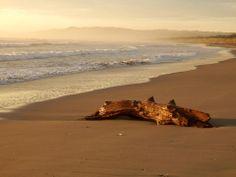 Morning light Mahanga Beach Morning Light, New Zealand, Places To Visit, Heaven, Beach, Water, Summer, Photography, Outdoor