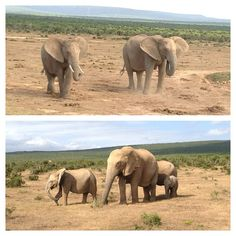@MegKHo's photos from Addo Elephant National Park in South Africa.