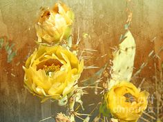 Photo By: Beverly Guilliams........Yellow Prickly Pear Cactus