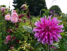 Jardins Monet-Giverny
