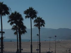 Travel With MWT The Wolf: Travel Notes Venice Beach Los Angeles California