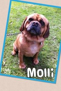 Molli. pet accomodation eastern suburbs