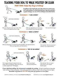 Things You Must Know When It Comes To Training Your Dog *** You can find out more details at the link of the image. #TrainDog