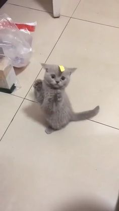 Cute kitten is confused by it s owners prank cute kittens cats kitten kitty catlovers funny cats on glass tables Fluffy Kittens, Cute Cats And Kittens, Baby Cats, Kittens Cutest, Funny Cute Kittens, Black Kittens, Kittens Meowing, Baby Zoo, Ragdoll Kittens
