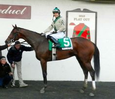 Samraat after his Withers Stakes win