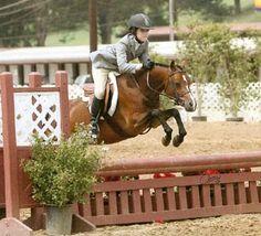 Prima Ballerina, small pony hunter