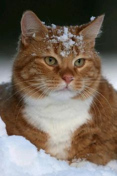 Snow cat doesn't like the snow as much as he thought he would.