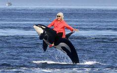 Paula Deen Rides a Killer Whale  Check out more funny pics at killthehydra.com