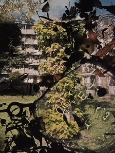 Talking To Ants - Stephen Gill (Signed) A Level Photography, Experimental Photography, Film Photography, Street Photography, Stephen Gill, Growth And Decay, Shadow Photos, Alternative Photography, A Level Art