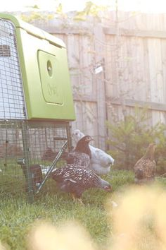 """Soudés treillis métallique 1/""""x1/"""" galvanisé clôture volière clapier chicken run coop pet"""