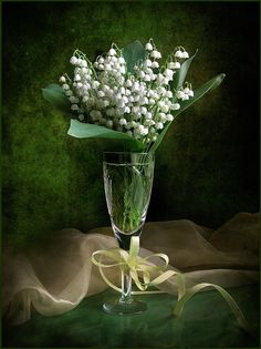 muguet lily of the valley Flower Arrangements, White Flowers, Cottage Garden, Language Of Flowers, Beautiful Flowers, Valley Flowers, Arrangement, Flowers, Lily