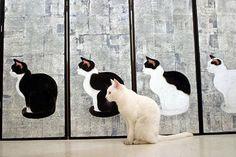 cat & cats