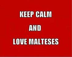 Keep calm and love maltese