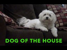 See a dog maintain his place as Dog of the House in this parody of a Mafia movie.
