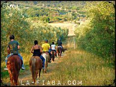 #horseriding through the olive groves in #Tuscany http://la-fiaba.com