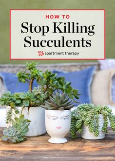 If you can't keep your trendy succulent alive for more than a week, check out this tip. Your plants and beautiful indoor garden should be maintenance to you.