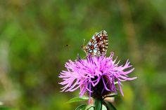Butterfly by Rausch Wilhelm Robert on 500px