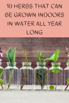 Growing Herbs, Growing Vegetables, Regrow Vegetables, Veggies, Growing Succulents, Gardening For Beginners, Gardening Tips, Indoor Gardening, Garden Projects