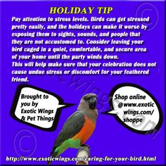 Holiday Tips for Living with Pet Birds