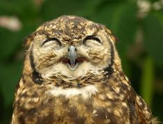 The Laughing Owl!  There is humor in the wisdom of the owl.