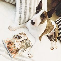 All Neville wanted for his first birthday was a copy of the September @Vogue Magazine. Happy birthday Neville!