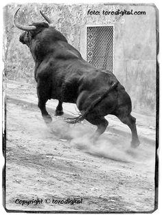 33 Toro Ideas Bull Art Bull Cow Bull Pictures