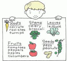 plants we eat worksheet worksheets may school plants parts of a plant science worksheets. Black Bedroom Furniture Sets. Home Design Ideas
