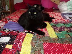 black cat on a quilt