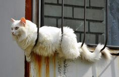 Cat in the window =^._.^=