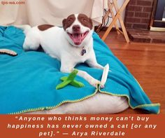We all want to be happy. Our furry family members just helps a lot to be. #tailoredpetservices #petsitting #doglife #bestwoof #lovedogs #dogwalking #lovepets #doglovers #dogsitters #dogwalk #washingtondogs #happydog #spoiledpets #happydogsclub #dogstagram #petstagram #instapet #instapup #instawoof #instadog #activedogsofinstagram #dogsofig #dogsofinstagram #petstagram #pupstagram #cutenessoverload