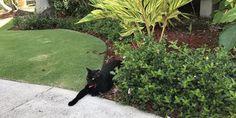 Have you met Paco? Sunshine, Plants, Animals, Animales, Animaux, Nikko, Animal, Plant, Animais