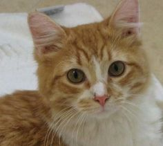"""This is cute """"Paprika"""" from San Antonio, Texas."""