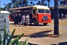 San Diego Zoo bus, 1950s