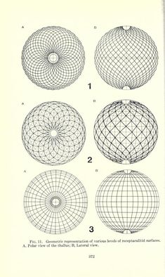 sabrinacampagna: Surficial pattern of receptaculitids Author: Nitecki, Matthew H Volume: Fieldiana, Geology, Subject: Dasycladaceae, Fossil Publisher: [Chicago] : Field Museum of Natural History Sacred Geometry Art, Geometry Tattoo, Geometry Pattern, Pattern Art, Surface Pattern, Geometric Drawing, Geometric Shapes, Math Art, Zentangle Patterns