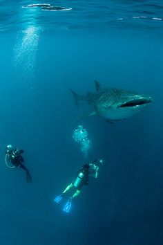 Whale shark #photo  Cool!