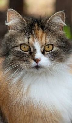 Antibiotics should not be used for cats with urinary tract infections. Instead, anti-inflammatory pain medications may help treat the inflammation.