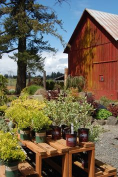 Bethany Nursery, near Beaverton