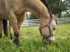 Making Smart Decisions: How SmartPak Solved My Allergic Mare's Diet Dilemma! Courtesy of our friends and partners at HorseJunkiesUnited.com.