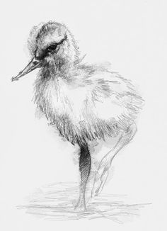 Artist Sean Briggs producing a sketch a day Chick #art #chick #drawing #http://etsy.me/1rARc0J #sketch